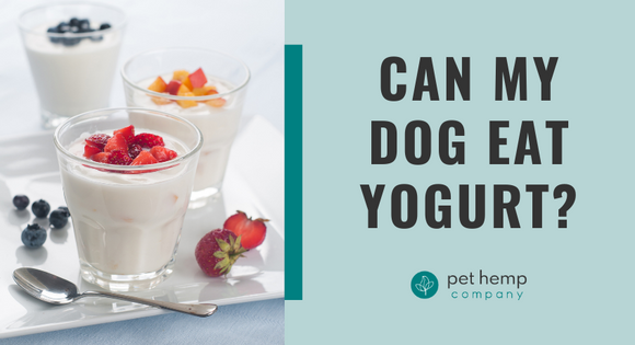 Can My Dog Eat Yogurt?