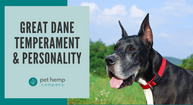 Great Dane Temperament & Personality