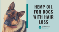Hemp Oil For Dogs With Hair loss