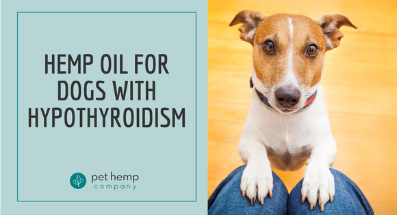 Hemp Oil for Dogs With Hypothyroidism