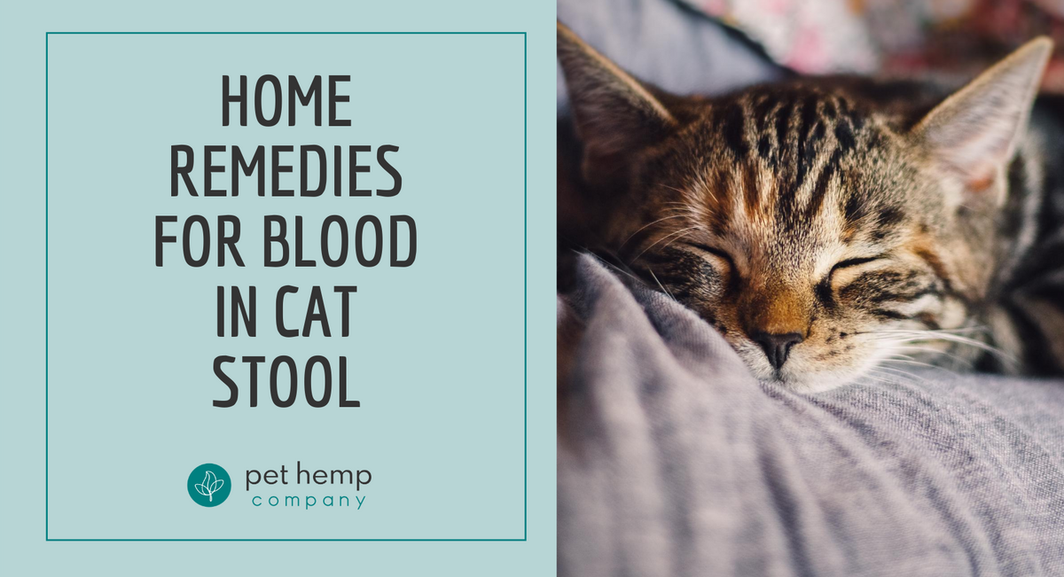 Home Remedies For Blood In Cat Stool