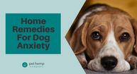 Home Remedies For Dog Anxiety