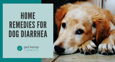 Home Remedies For Dog Diarrhea
