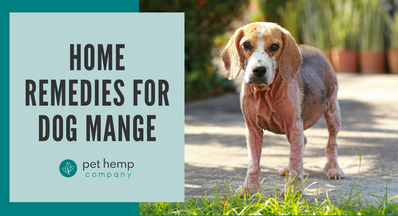 Home Remedies For Dog Mange