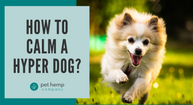 How to Calm a Hyper Dog?
