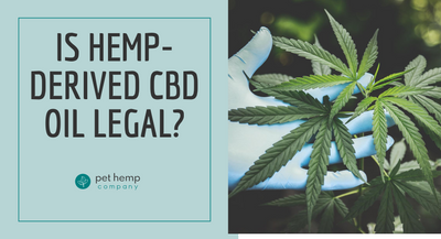 Is Hemp-Derived CBD Oil Legal?