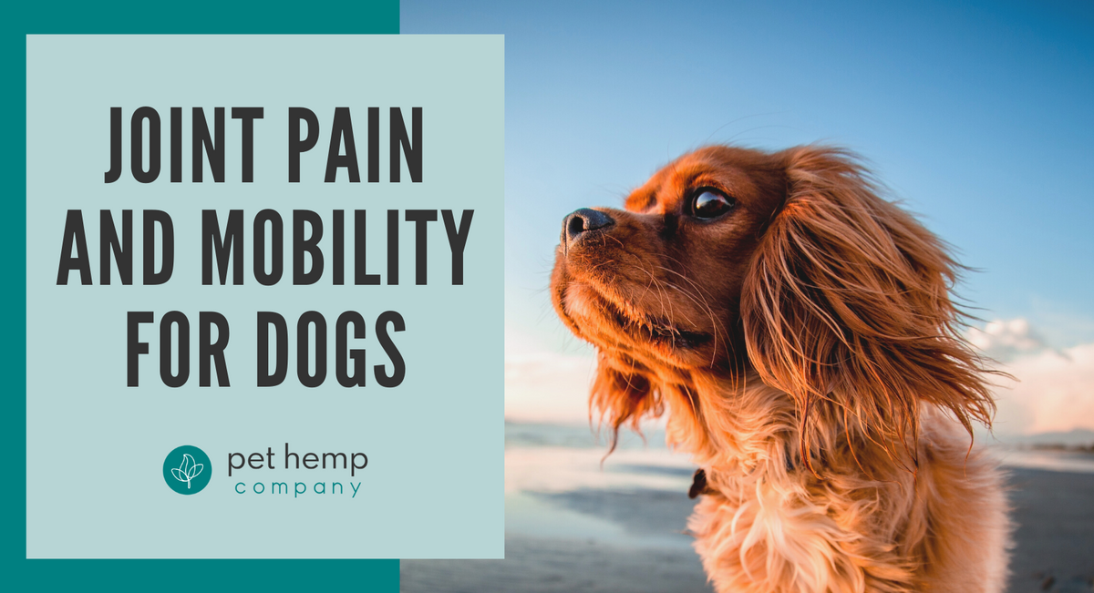 Joint Pain And Mobility For Dogs