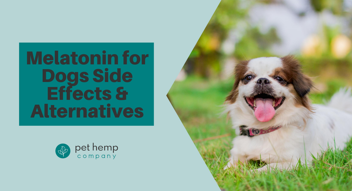 Melatonin for Dogs Side Effects & Alternatives