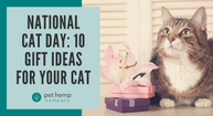 National Cat Day: 10 Gift Ideas for Your Cat