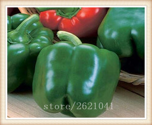 100pcs Sweet Pepper vegetable seeds High budding rate fast growth coloful choice for home garden