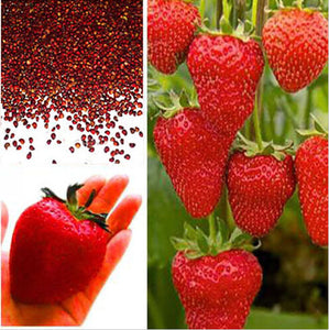 200 seeds- Red Strawberry Seeds, Garden Fruit Plant, Delicious