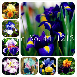 200 Pcs seeds Iris Flower Home Garden Planting