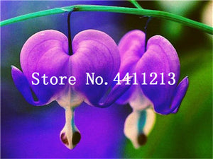 100 Pcs Lily Of The Valley Flower Flowers plant, Multi-colored