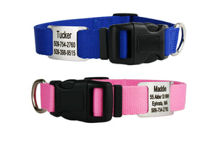 GoTags Dog Collar with Tag Nameplate