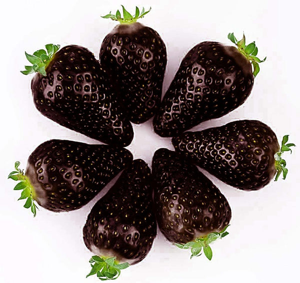 Egrow 200 PCS Black Strawberry Seeds Fresh Exotic Tasty Fruit Potted Seed Garden Bonsai Plant - Slabiti