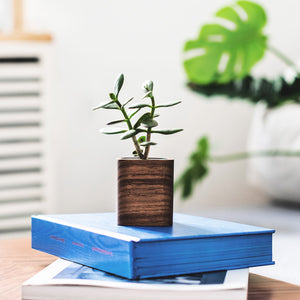 Square Wooden Succulent Planter