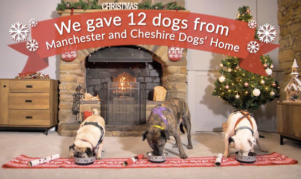 12 Days of Christmas A Rescue Dog Re-Homing Mission
