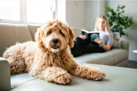 Ideas to keep your dog entertained at home in Lockdown