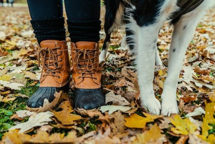 How to Protect Your Dog's Paws This Winter