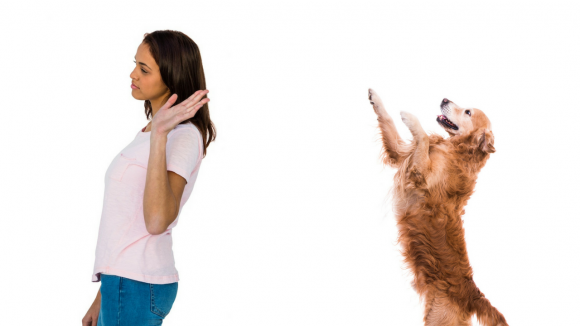 How to eliminate problematic dog behaviors like jumping up to say hello.