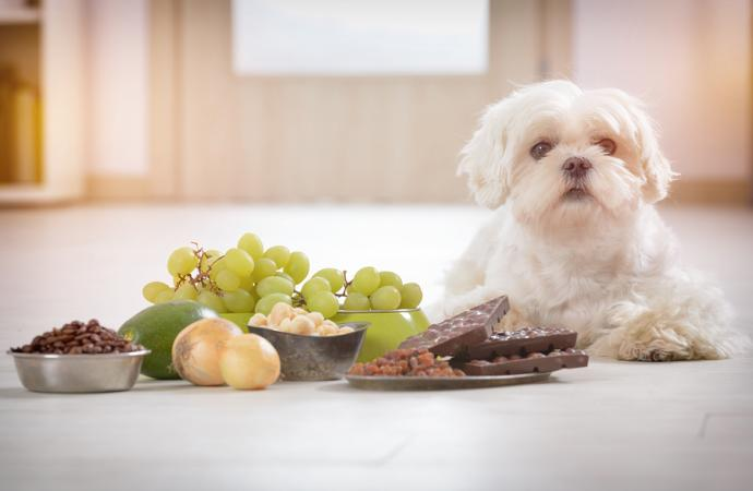 What household items pose a toxic threat to our pets?