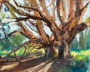 Brobdingnag Tree - San Simeon Point | 48x60 | Original Oil on Canvas