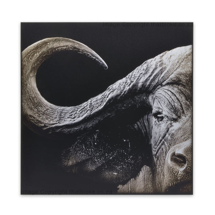 Buffalo South African Big Five Game Animal Wood Print
