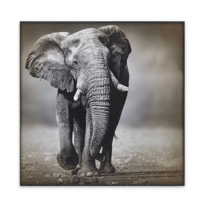 Elephant South African Big Five Game Animal Wood Print