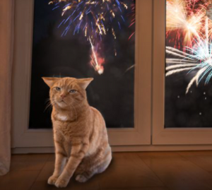Animals and Fireworks