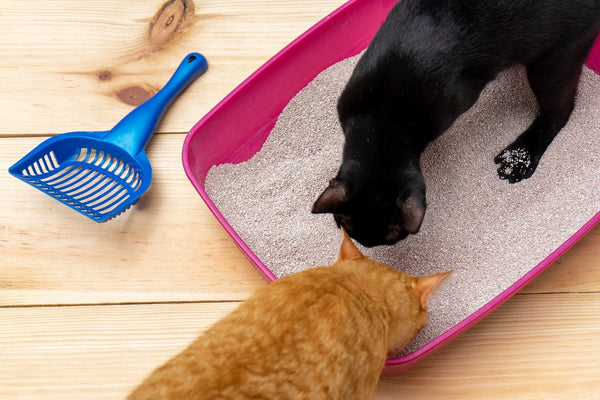 Will an Air Purifier Help with Cat Smell?