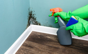 Do Air Purifiers Help with Mold?