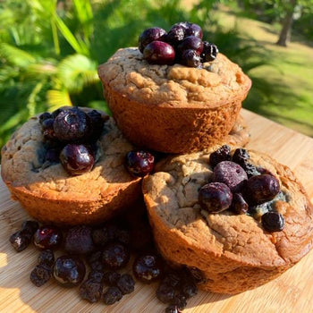 Coconut Blueberry <br> Protein Muffins
