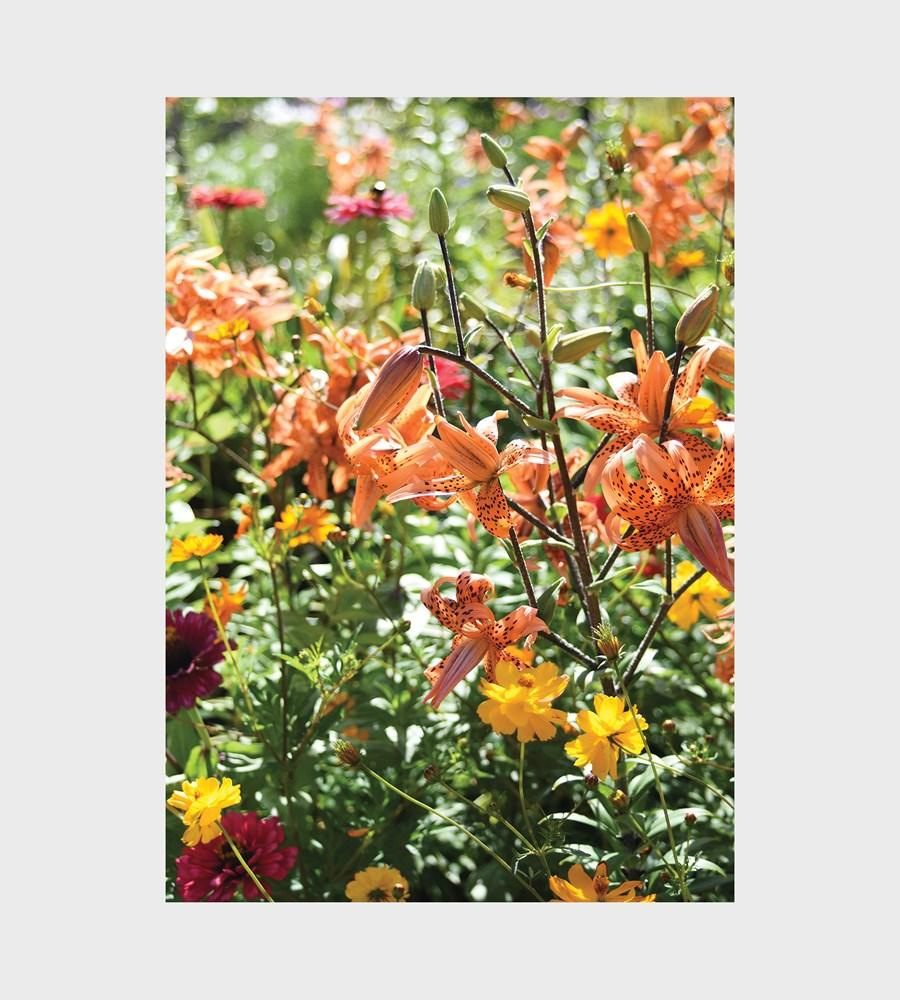 Orange Flowers 1000 Piece Puzzle. Compendium Design Store, Fremantle. AfterPay, ZipPay accepted.