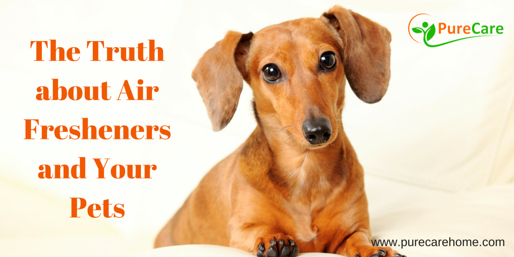 The Truth about Air Fresheners and Your Pets