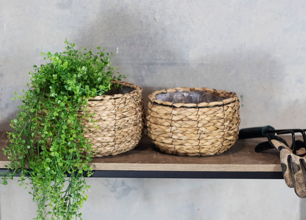 Cattail Set of 2 Shallow Planters with Liners