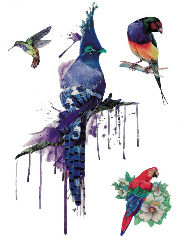 Parrot, Hummingbird and Blue Jay