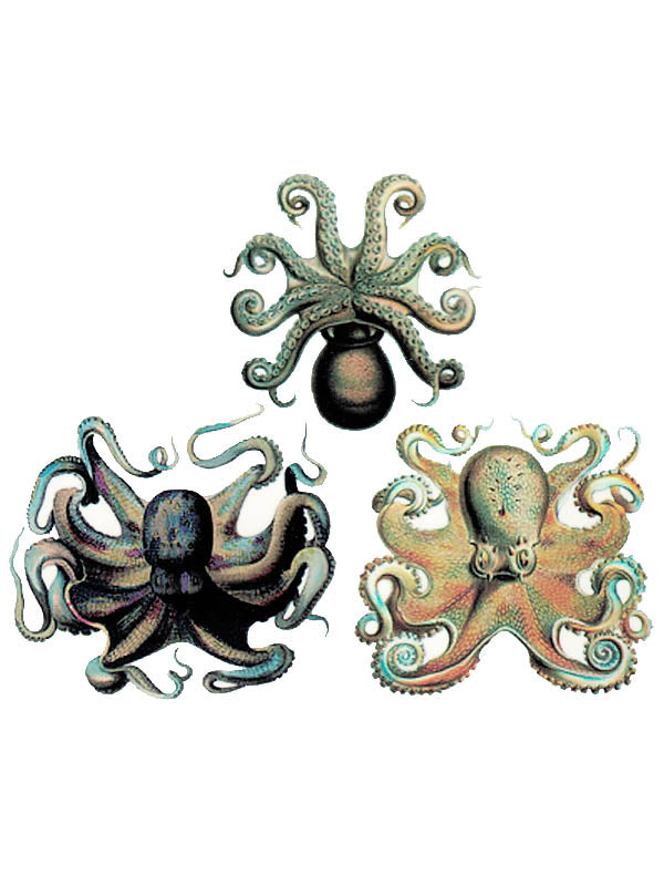 Trio of Octopuses