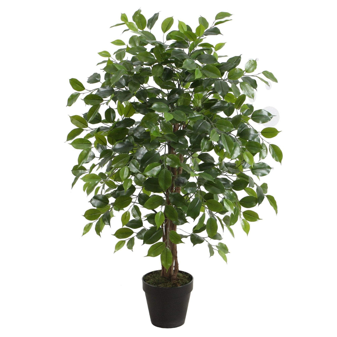 POTTED FICUS TREE 90CM
