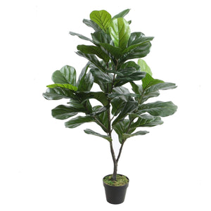 POTTED FIDDLE TREE 125CM