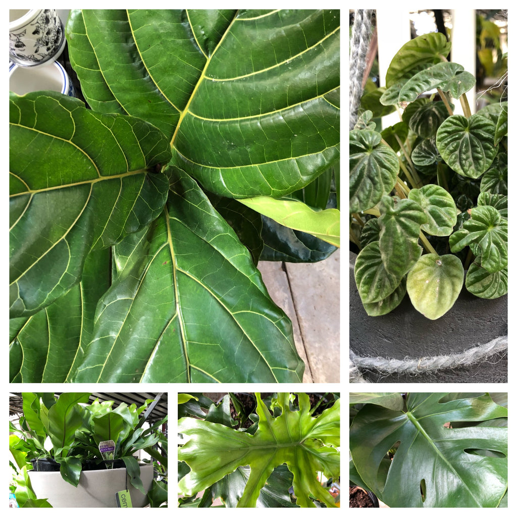 Extensive range of indoor plants