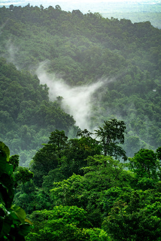 Catching Up With Christian Arnstedt, image of rainforests.