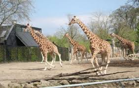 What's On In Copenhagen: March 2020, image of Cph Zoo.