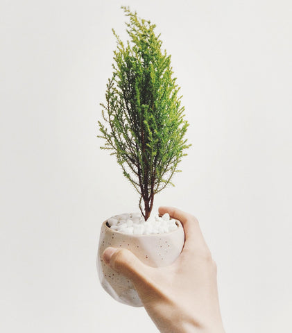 Copenhagen Startups: Giving Back Is In Their DNA, image of planted tree.