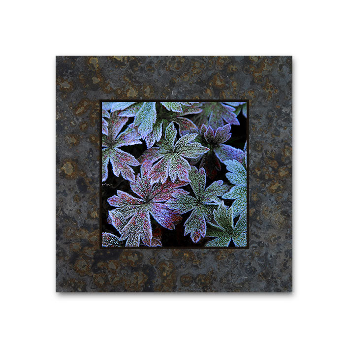 Frosted Leaves, San Juan Mountains 4x4 Slate Coaster