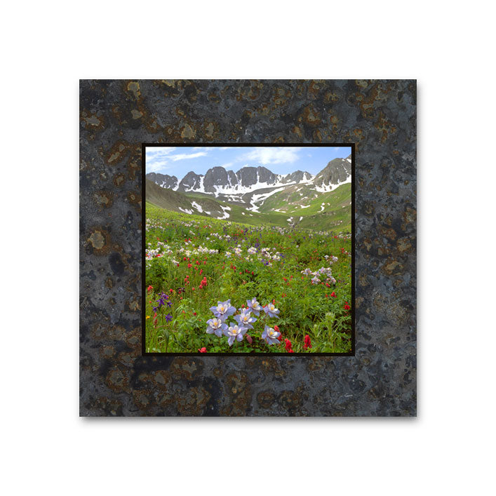 Fields of Columbine, American Basin, San Juan Mountains 4x4 Slate Coaster