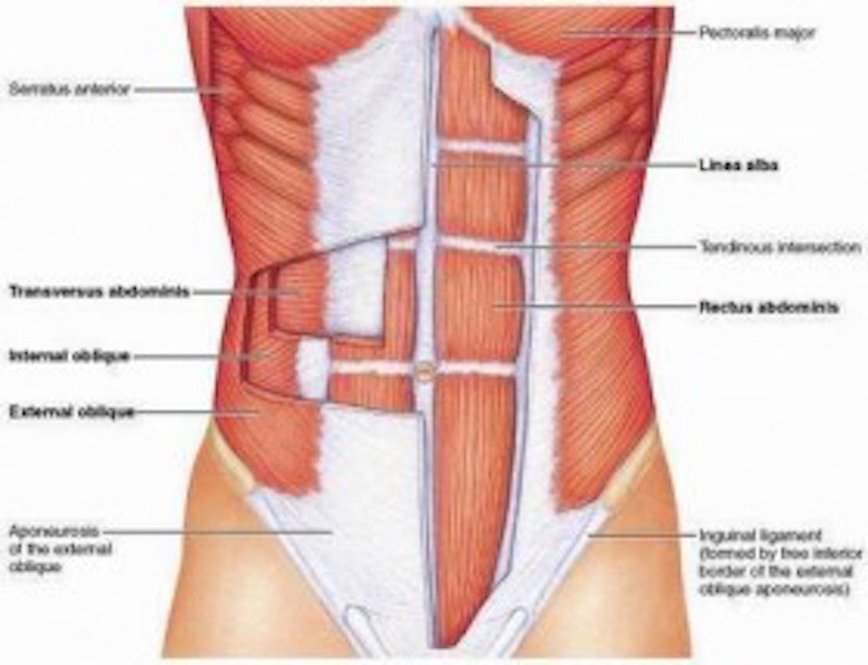 Diagram of ab separation|Diagram of abdominal separation