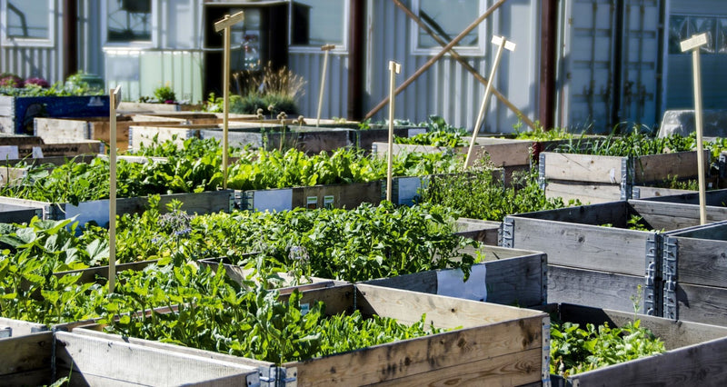 The Benefits of Organic Urban Farming | Wholefood Earth®