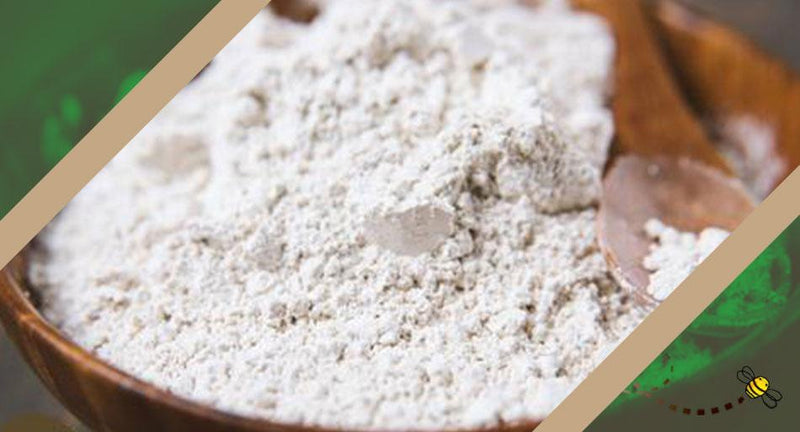 What is Diatomaceous Earth? | Wholefood Earth®