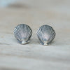 Sea shell stud earrings