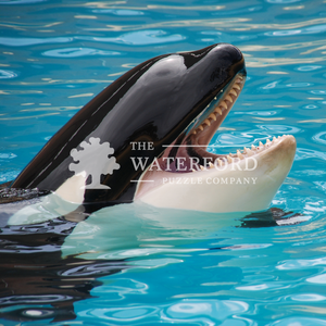 Orca: Animal Photography